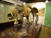 Fósiles en Acuario de Colonia del Sacramento